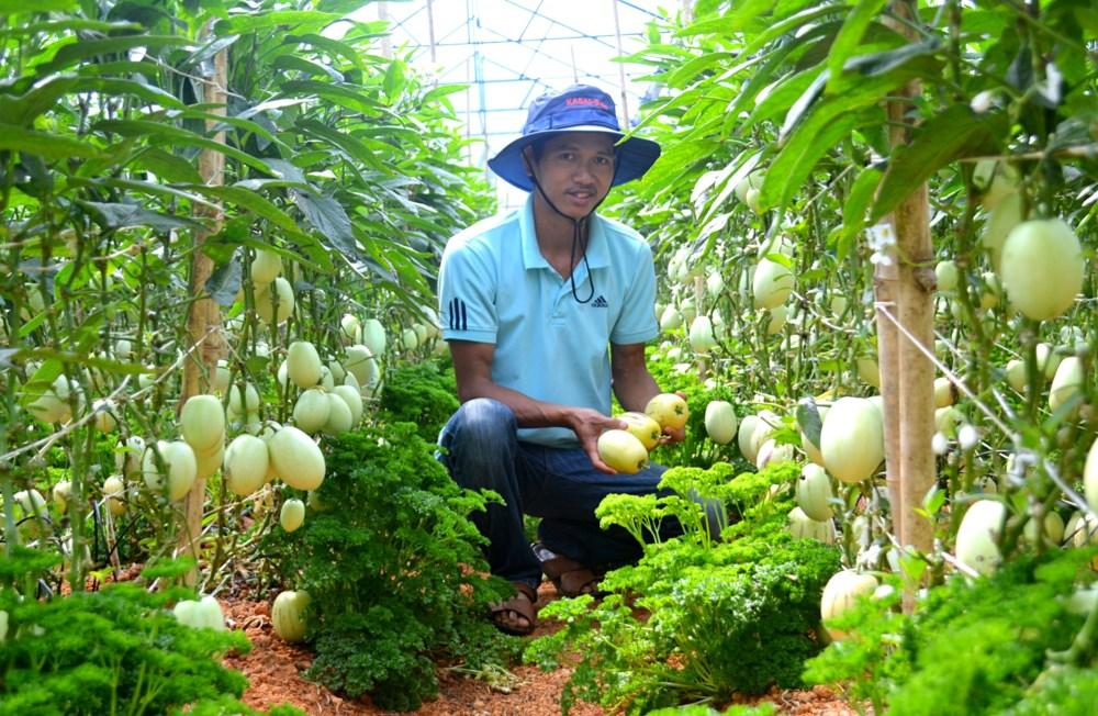 vườn dưa pepino định farm