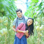 vườn dưa hấu pepino